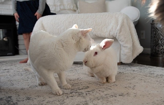 adopting a rabbit